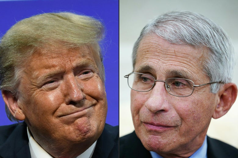 Side-by-side photos of Trump and Fauci