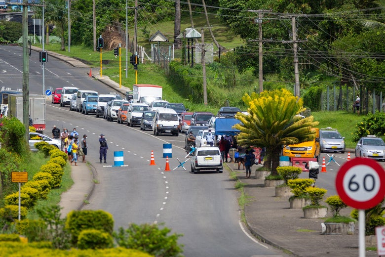 A line of cars on a road with tropical foliage.