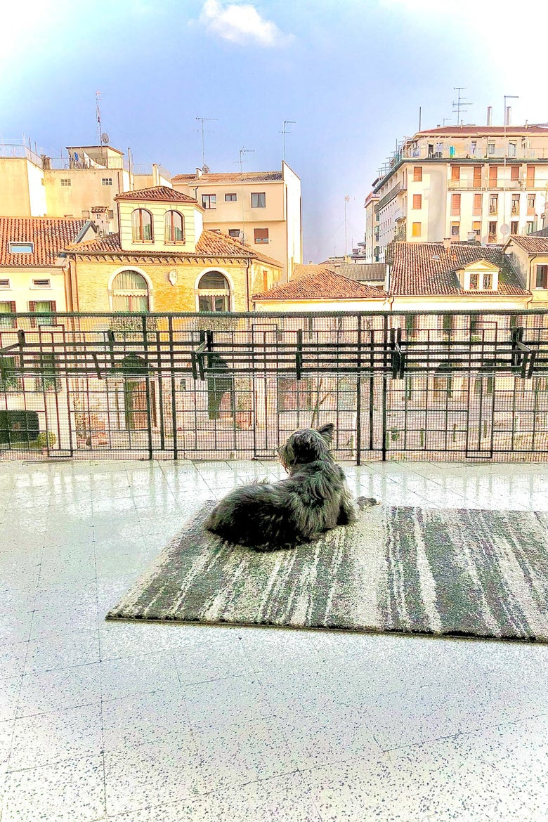 A dog on an terrace.