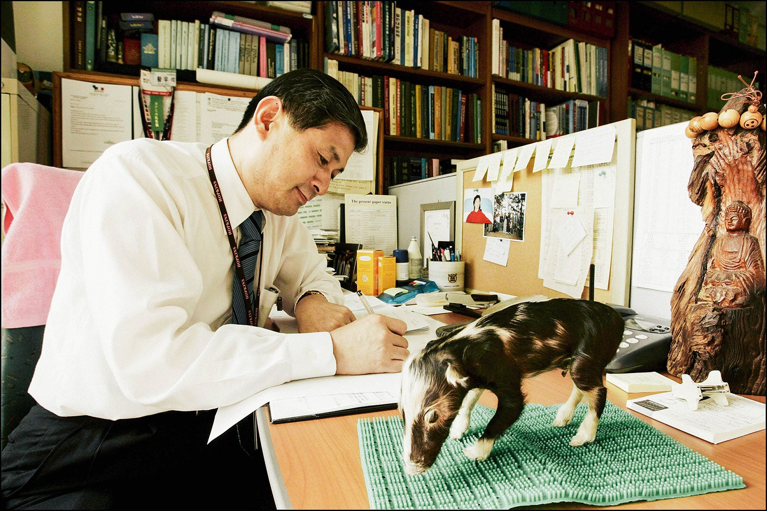 A scientist sits at a desk with a stuffed pig.
