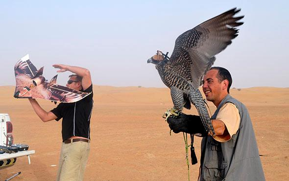 Urban falconry in Dubai.