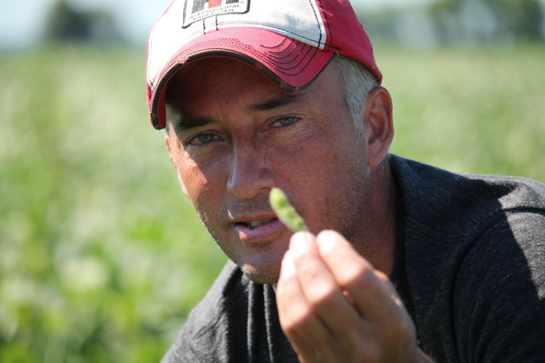 Farmer Terry Davidson displays one of his soybeans July 6, 2018, in Harvard, Illinois, the same day China imposed retaliatory tariffs aimed at the US soybean market. - Davidson, 41, is a fifth generation farmer, a Democrat among mostly Republicans. He expects to be farming long after the US-China trade tariffs become a distant memory. 'We've survived since the 1800s and we're still going. So, I think we'll keep going,' Davidson says. (Photo by Derek R. HENKLE / AFP)        (Photo credit should read DEREK R. HENKLE/AFP/Getty Images)