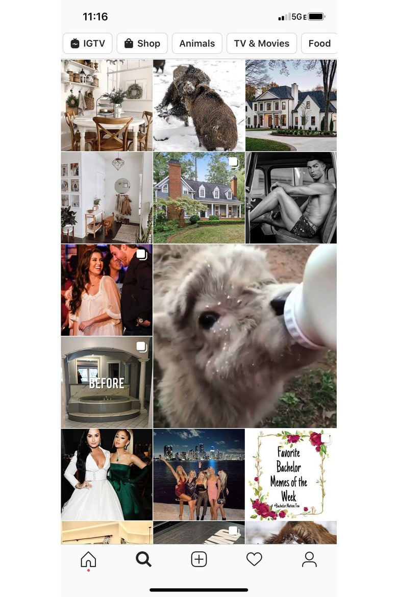 Screenshot of an Instagram Explore feed, featuring photos of animals and nice houses.