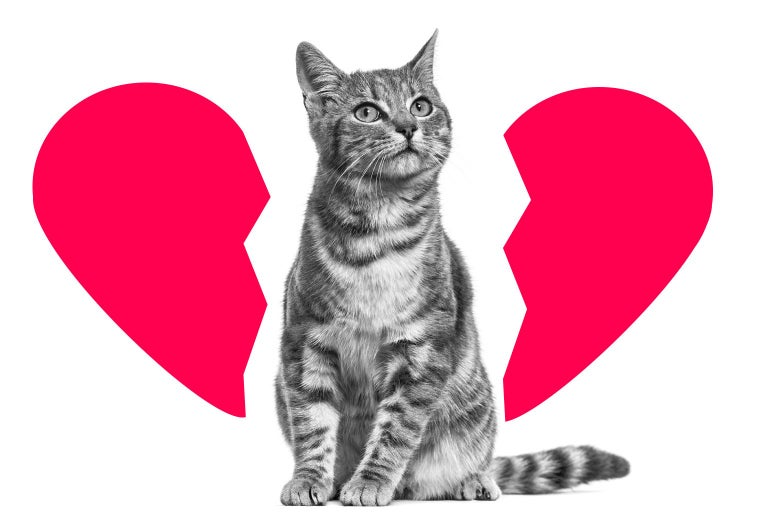 Cat sitting in the middle of a broken heart
