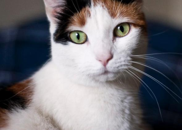 Do animals know they are going to die? My cat told me she