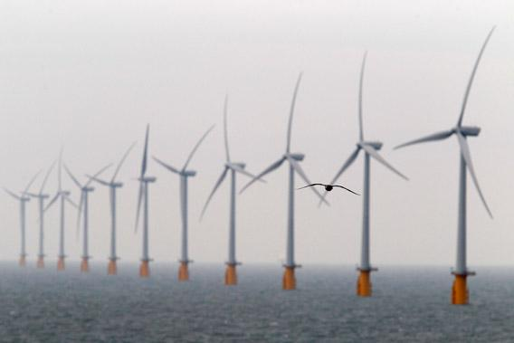 A seagull flies past wind turbines at Thanet Offshore Wind Farm off the Kent coast in southern England.