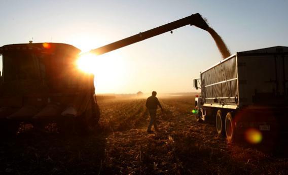 Farmer loading a grain truck in Illinois.
