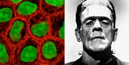 Single Cell (R) and Frankenstein's Monster (L). Click image to expand.