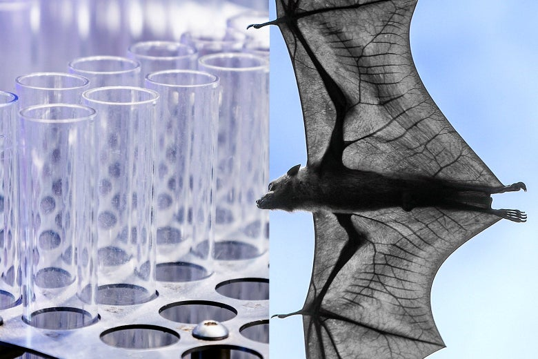 A side-by-side of test tubes and a bat