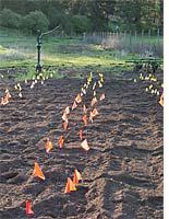 Mustard-meal field trials