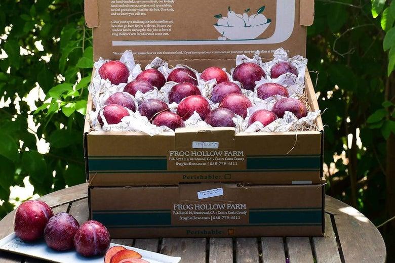 Frog Hollow Farm Fresh Fruit boxes