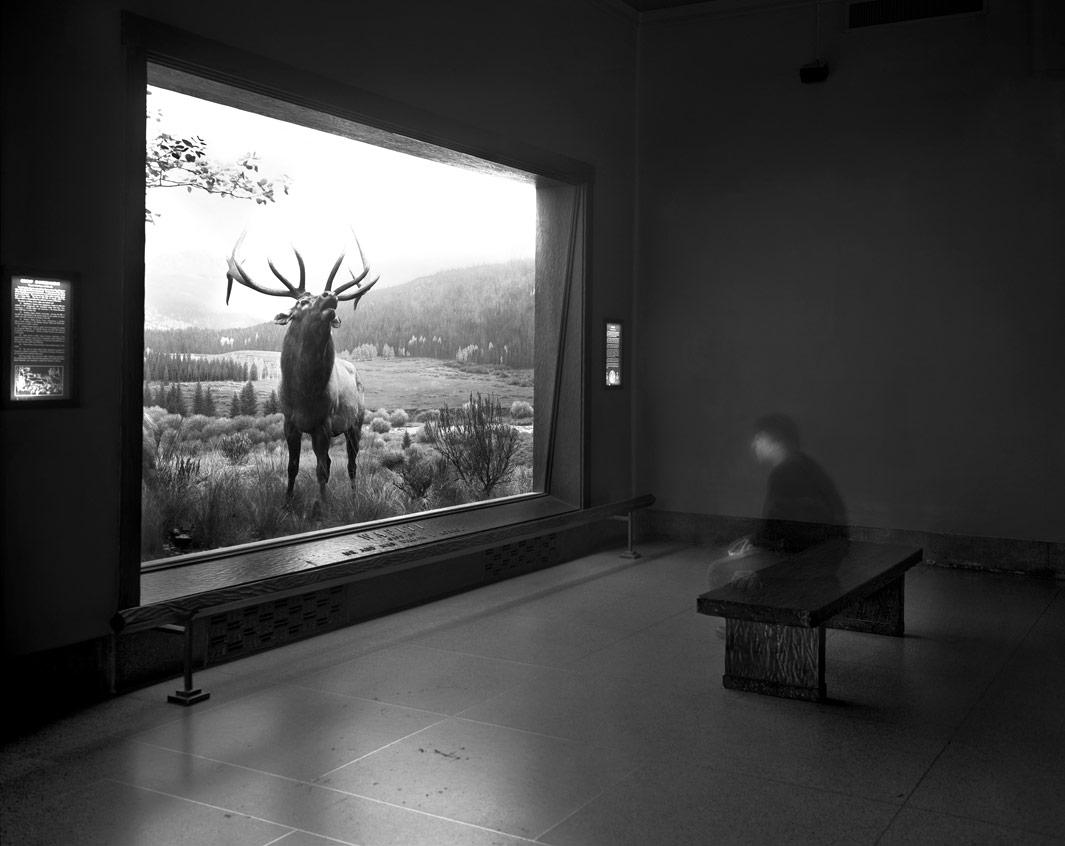 Self portrait contemplating Wapiti, Museum of Natural History, 2004