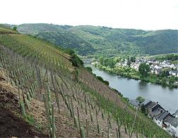 Steep slope viticulture, Zell (Mosel), Deutschland. Click image to expand.
