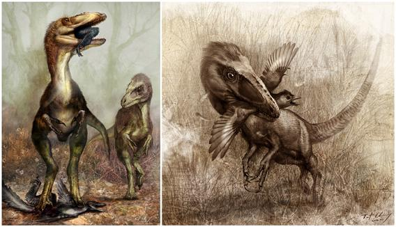 Sinocalliopteryx as a stealth hunter feeding on the dromaeosaur Sinornithosaurus, left, and the primitive bird Confuciusornis, right.
