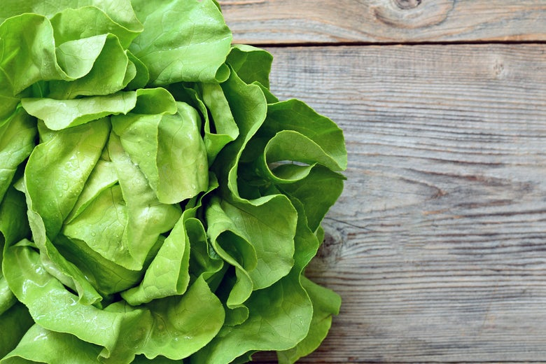 A head of butter lettuce on a table.