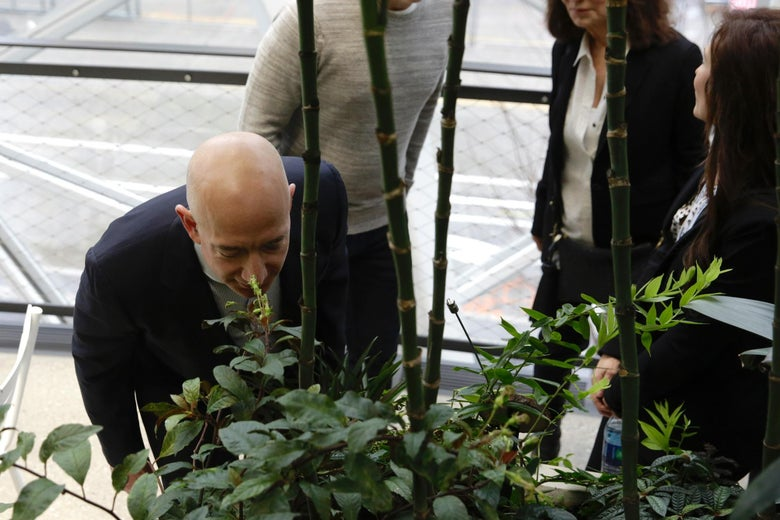Chief Executive Officer of Amazon, Jeff Bezos, tours the facility at the grand opening of the Amazon Spheres, in Seattle, Washington on January 29, 2018.         Amazon opened its new Seattle office space which looks more like a rainforest. The company created the Spheres Complex to help spark employee creativity.  / AFP PHOTO / JASON REDMOND        (Photo credit should read JASON REDMOND/AFP/Getty Images)