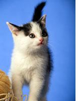 Cat-loving guys: trend or twaddle?