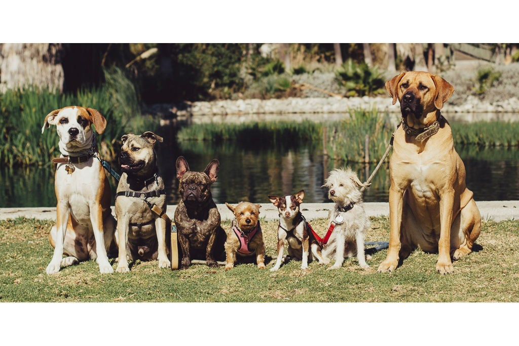dogs lined up