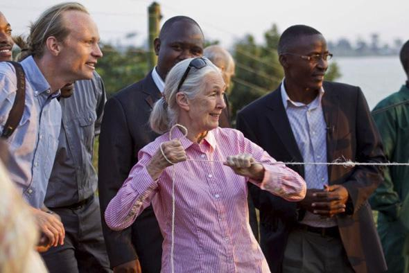 Jane Goodall opens the hatch to an African Grey Parrot aviary at World Parrot Trust.