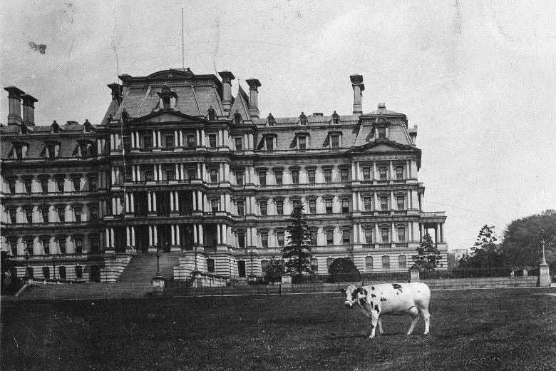 A cow grazing in front of what is now known as the Eisenhower Executive Office Building.