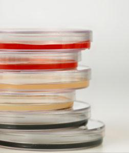 Why do scientists always use yeast in their experiments?