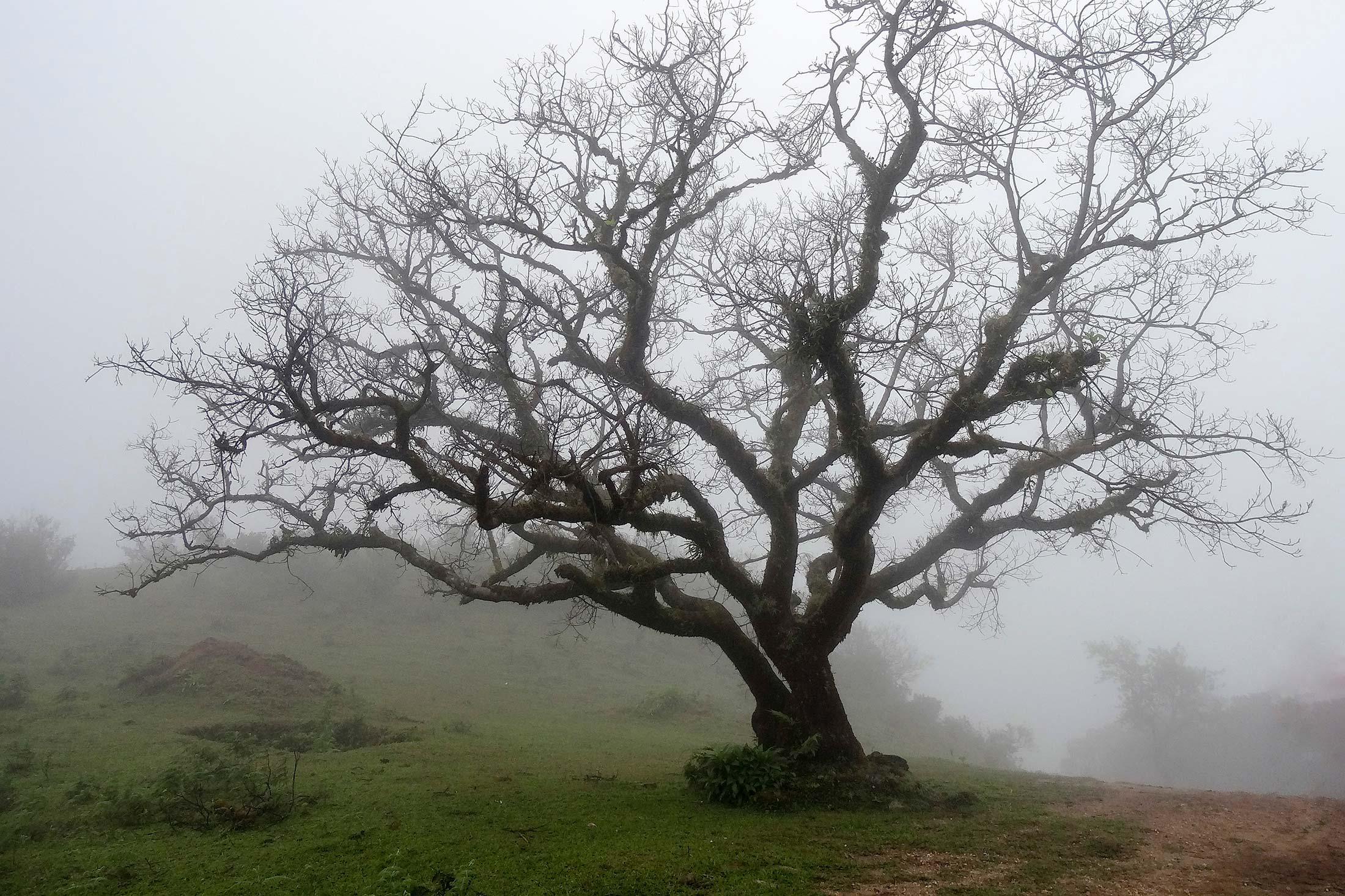 Tree in a foggy garden.