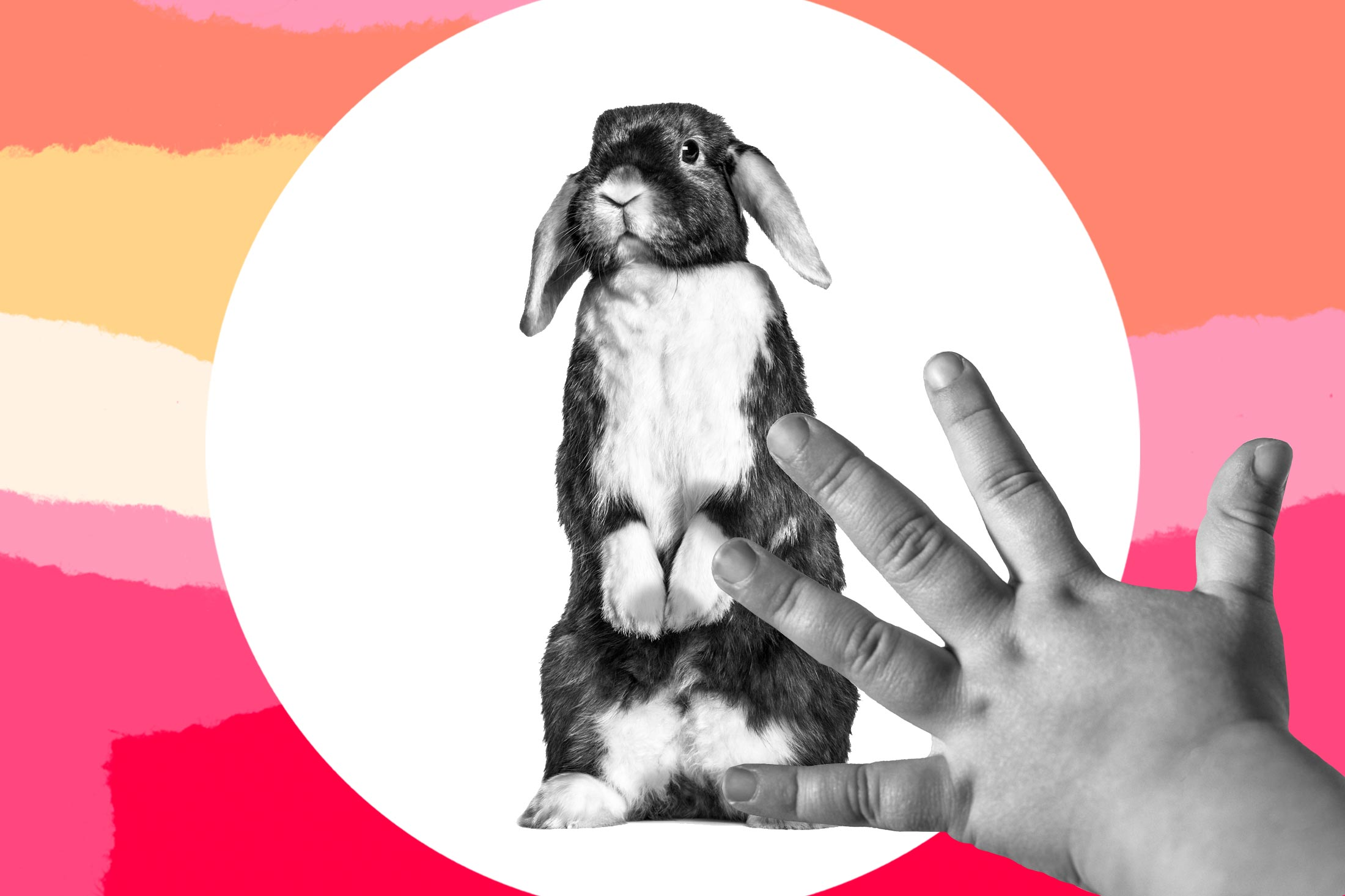 Photo illustration of a toddler petting a bunny.