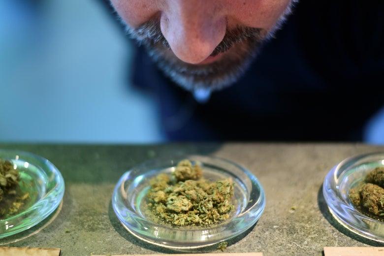 Aa man smelling a sample of marijuana buds.