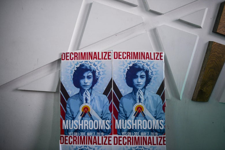 "A pair of posters reading ""Decriminalize Mushrooms."""