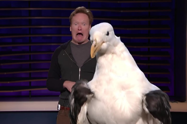 Conan O'Brien making an alarmed face as a seagull looms in front of the camera.