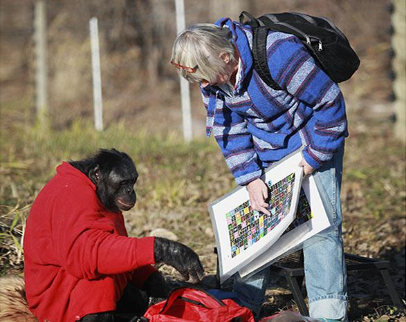 Dr. Sue Savage-Rumbaugh instructs the bonobo Kanzi to make a fire on Nov. 11, 2011 in Des Moines, Iowa.