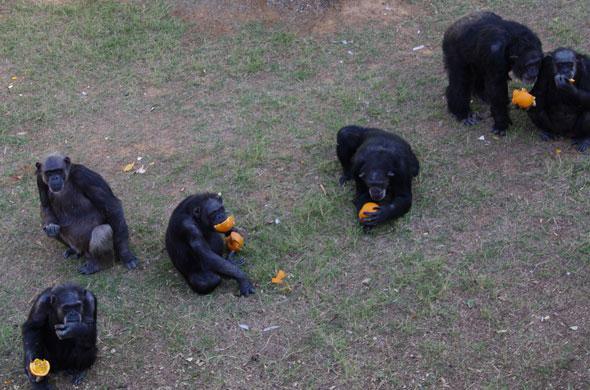 Eating pumpkins