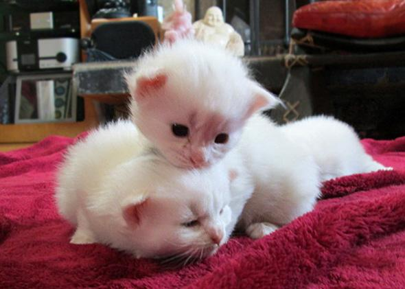 Kittens from Animal Planet's Too Cute.