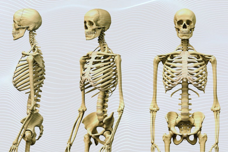 Three skeletons against a wavy 3D printed-type background.