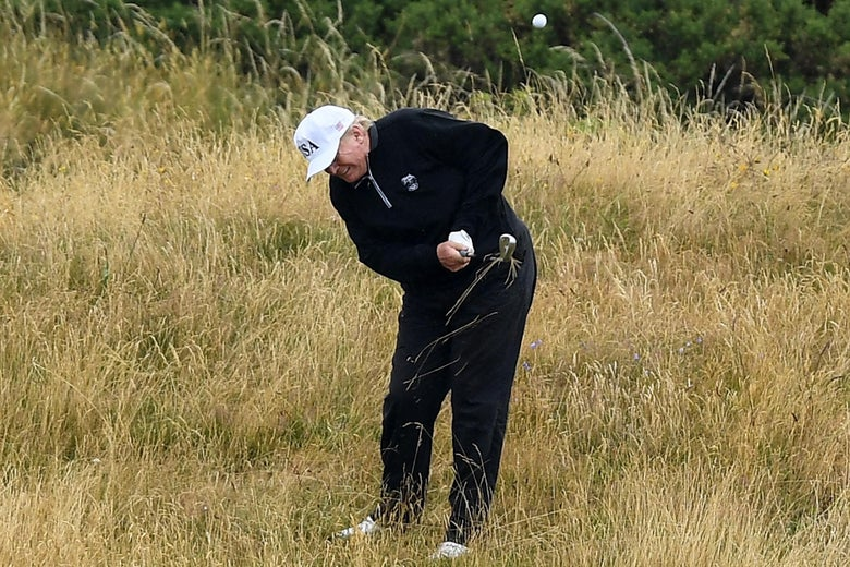 Donald Trump playing golf in a field of tall grass.