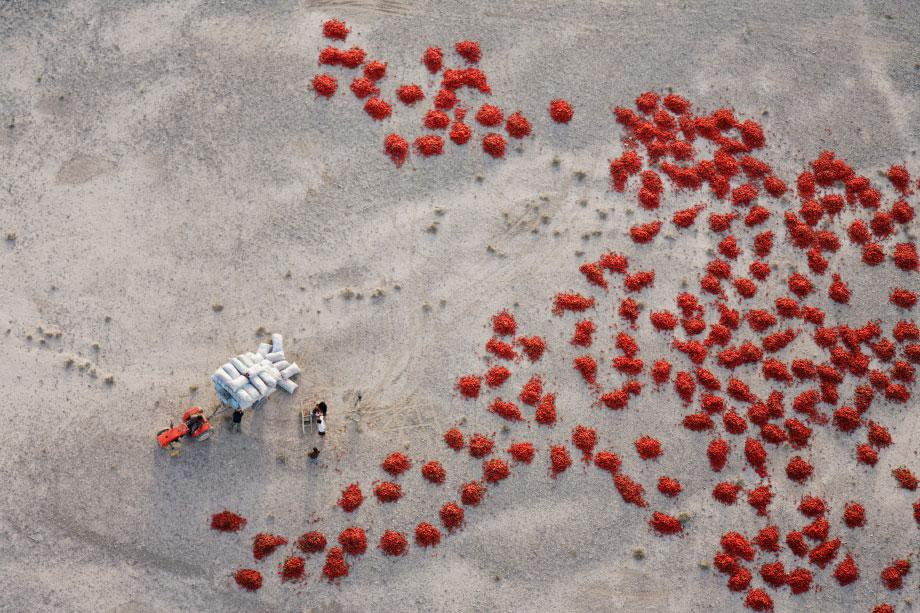 Xinjiang, China. Red Peppers are bagged after being laid out to dry in the gravel plains near Baicheng, Xinjiang, China. Although mostpeople presume all deserts are sandy areas, the majority of the earth's hyperarid regions are barren gravel plains.