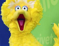 Big Bird. Click image to expand.
