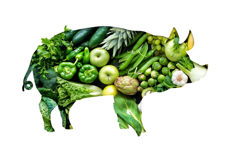 A silhouette of a pig made entirely out of green vegetables and plants.