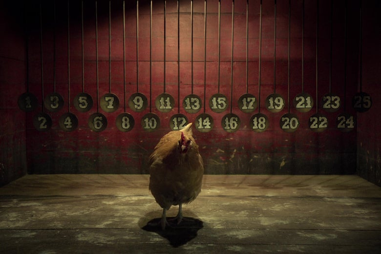 A chicken in front of a wall of tin plates with numbers painted on them.