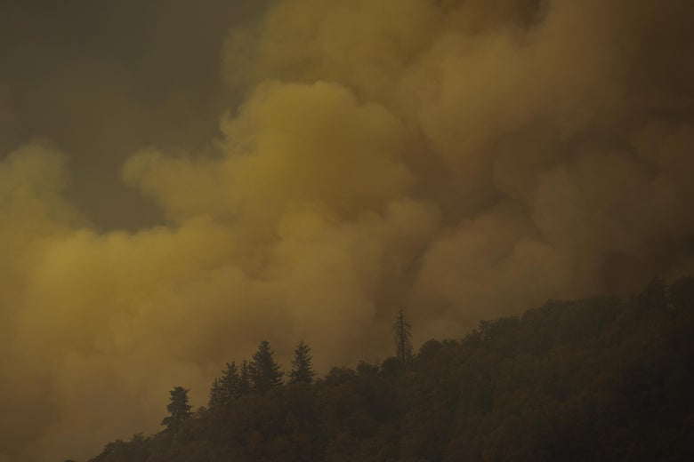 Smoke rises from a forest on a hill.