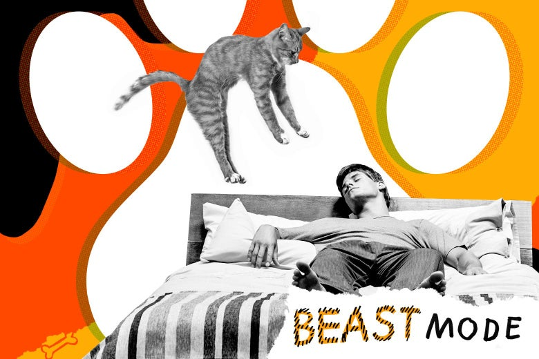Photo illustration of a cat dive-bombing onto a sleeping man.