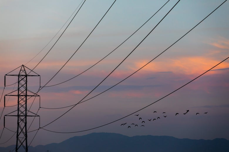 Birds fly near high tension lines during sunrise or sunset.