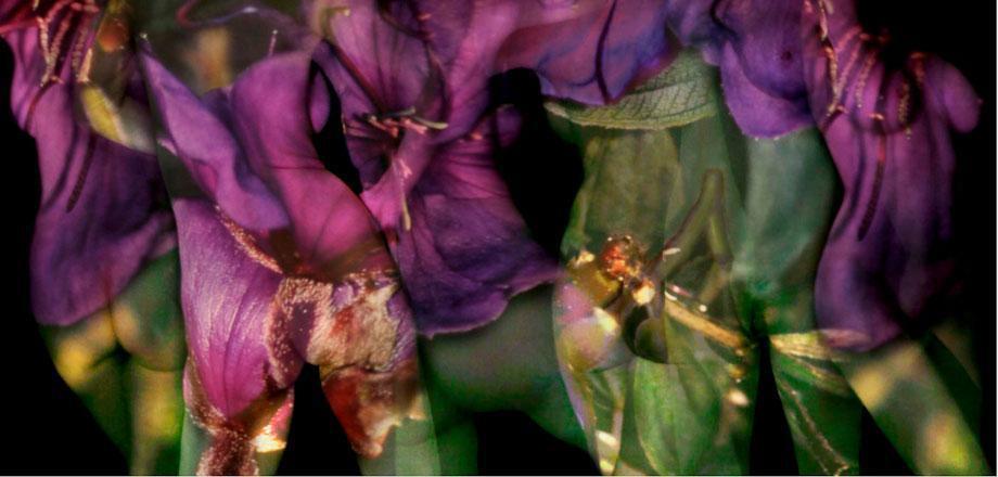 Jenny Okun. Purple Flower Nude.