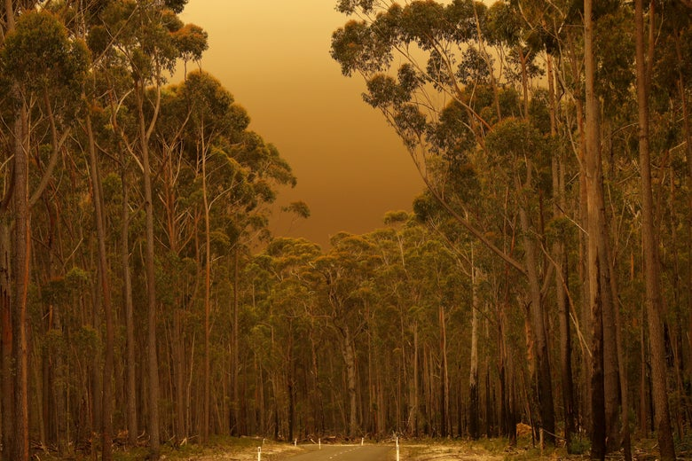 A road in a forested area is cast in a hazy light.