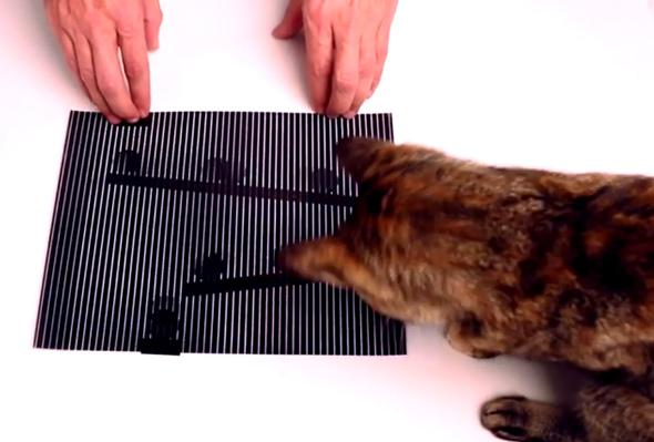 cat and opitcal illusion