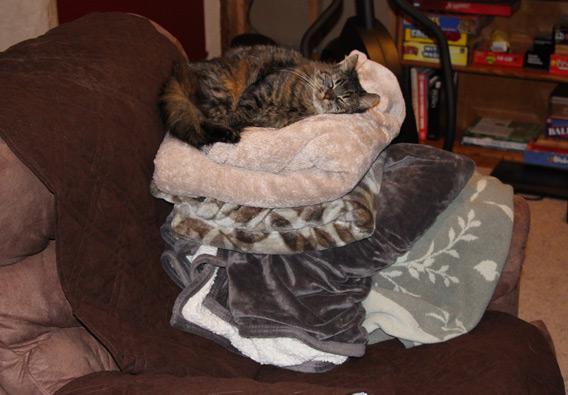 Cat sleeping on blankets