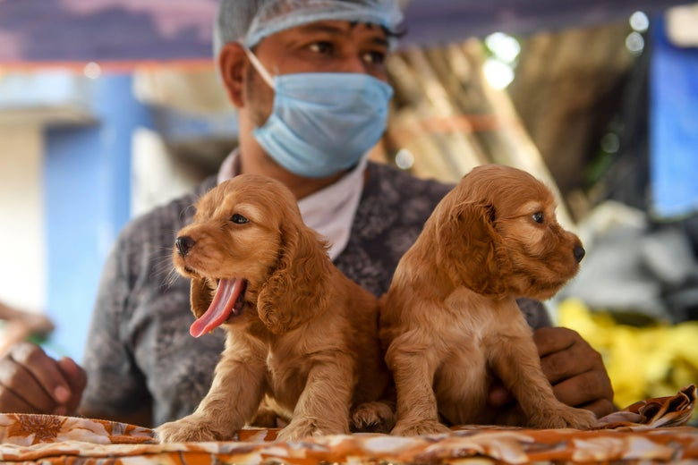The Problem With Pandemic Puppies