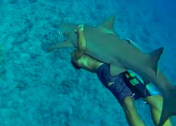 Swimmer in Bora Bora Bear Hugs Shark and Goes For a Ride