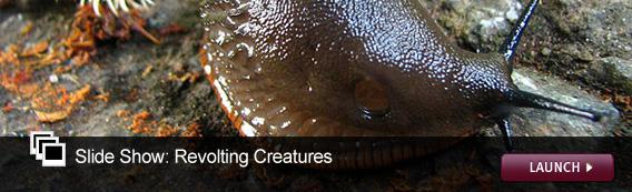 Slide Show: Revolting Creatures. Click image to launch.