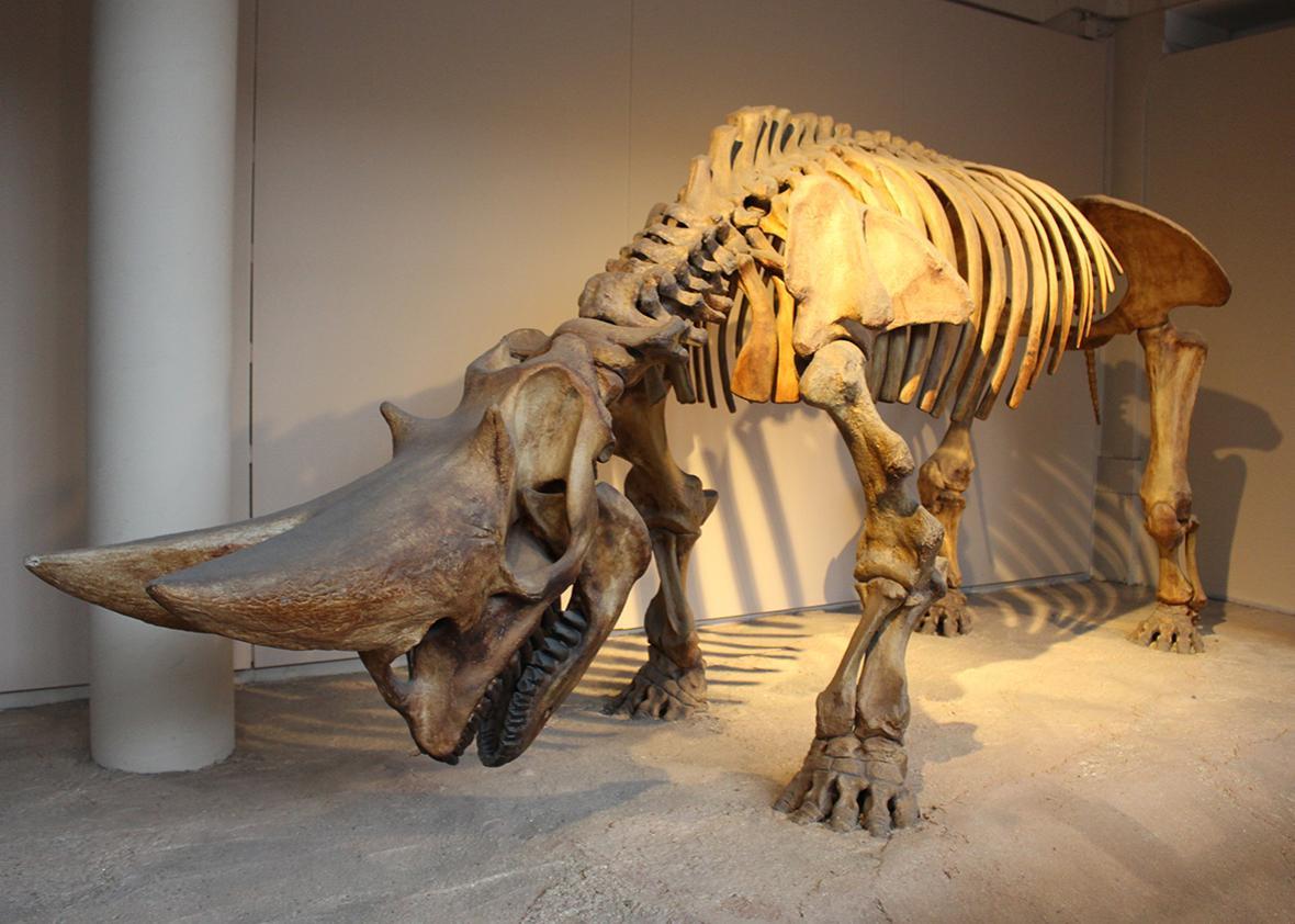 Arsinoitherium.